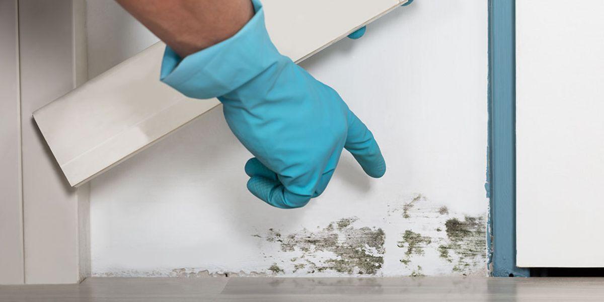 rimuovere la muffa dai muri